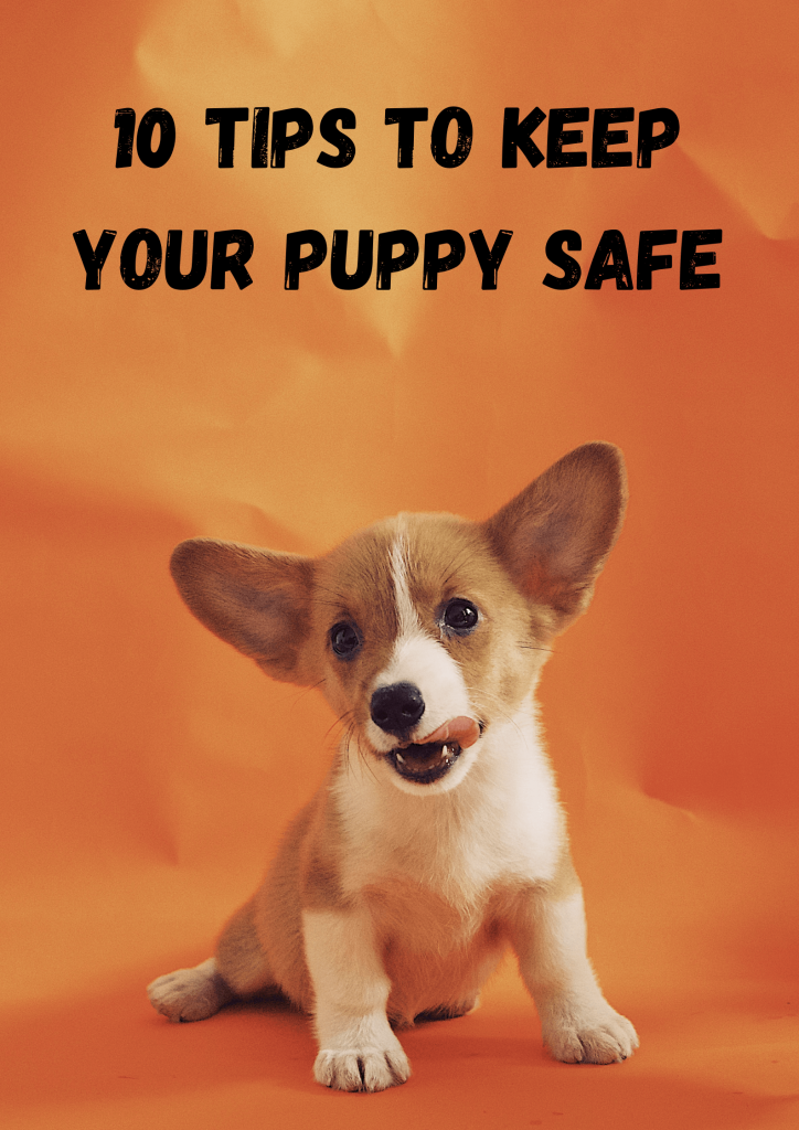 10 Tips To Keep Your Puppy Safe 2
