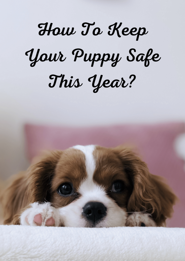 10 Tips To Keep Your Puppy Safe 3