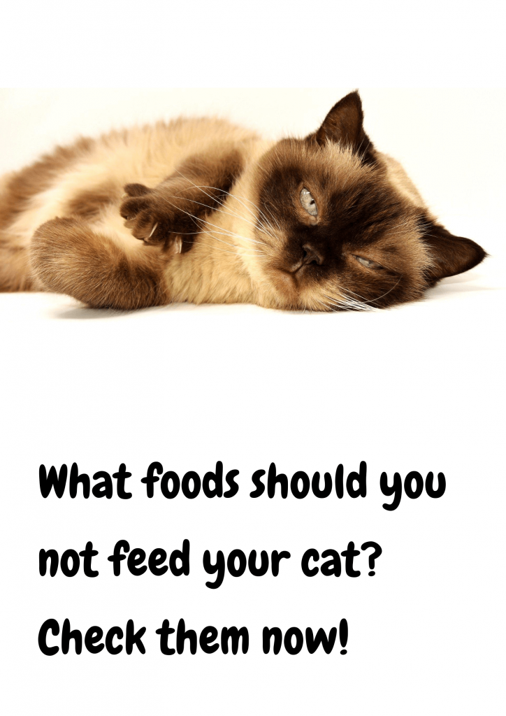 10 foods your cat should never eat 2