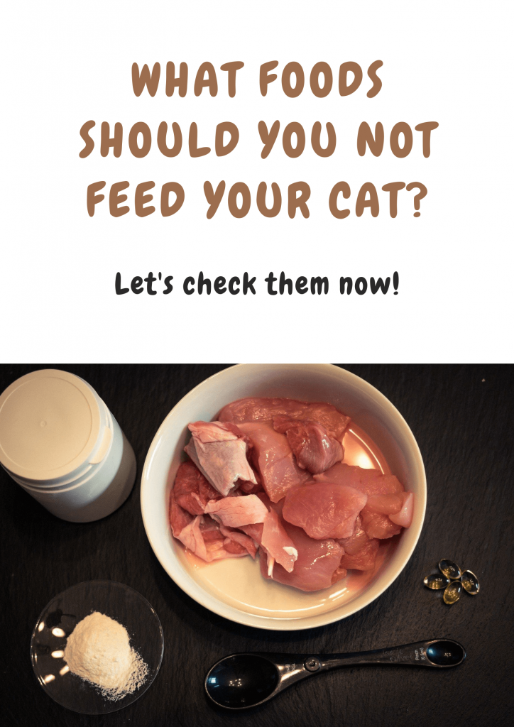 10 foods your cat should never eat 3