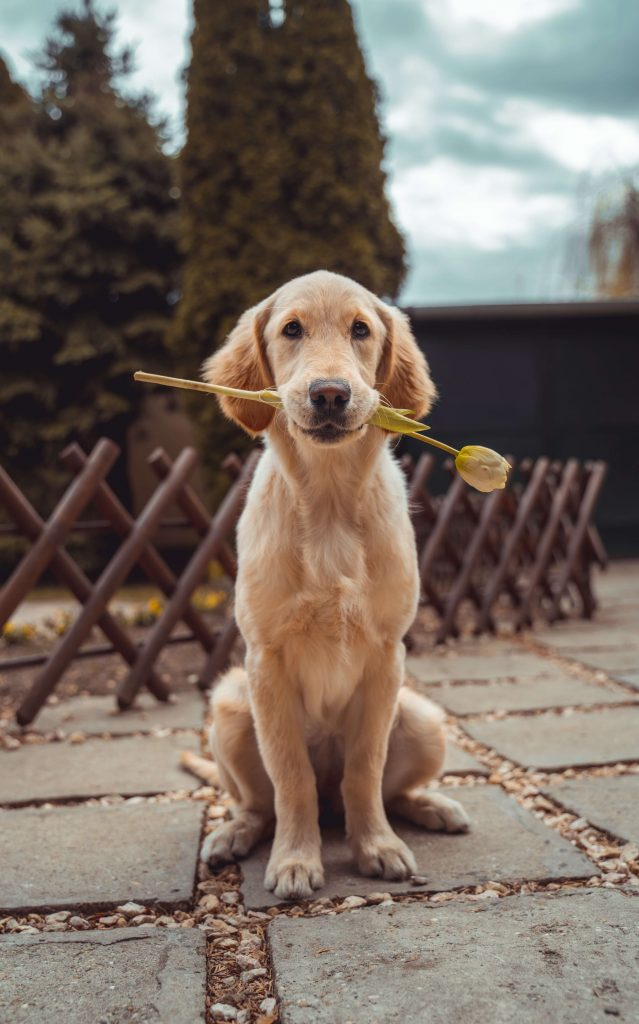 10 signs your dog likes you and love you 2