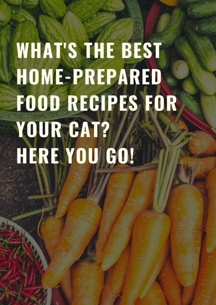 The best home-prepared food recipes for your cat 1