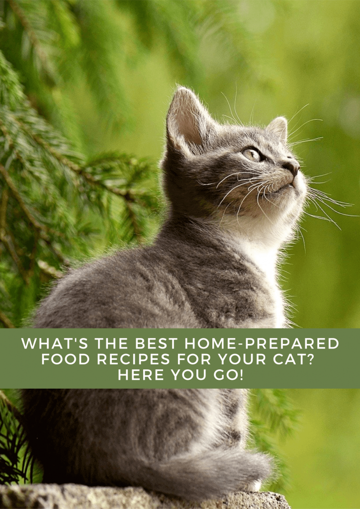 The best home-prepared food recipes for your cat 3